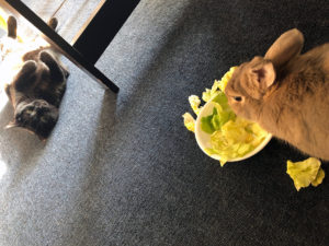 Image of Autumn, the cat, staring at Ridley, the bunny, while he eats